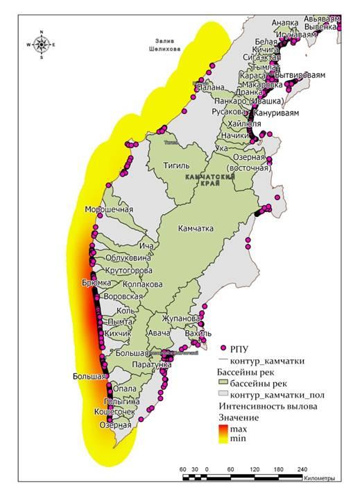 Распределение уловов горбуши на западном побережье Камчатки в конце июля 2019 г.